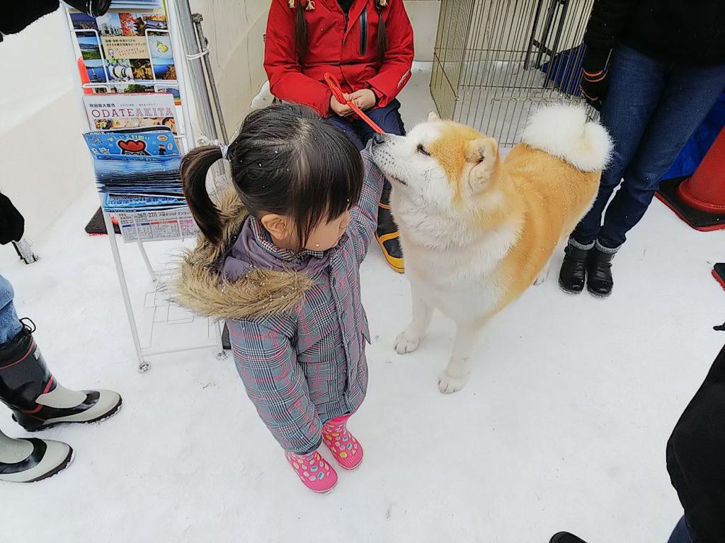 秋田犬ふれあいコーナー