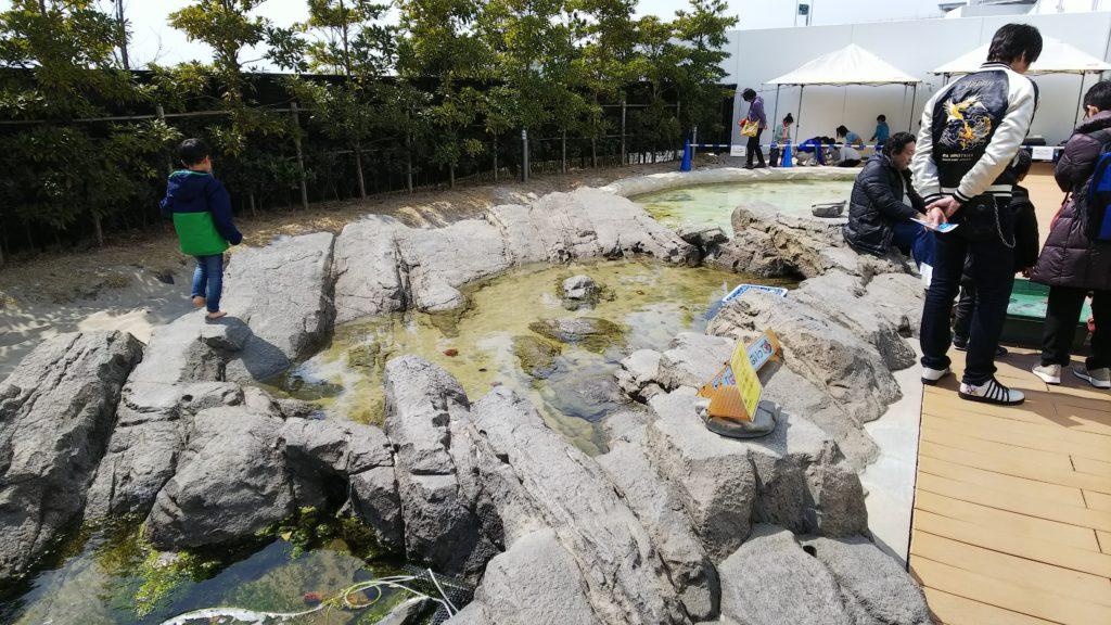 うみの杜水族館タッチプール