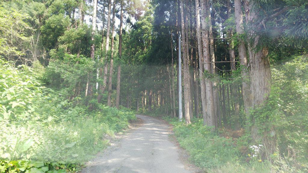 老犬神社山道